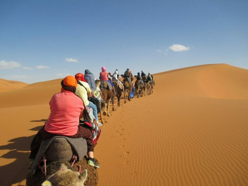 Katie's group tour on camel back in the Sahara