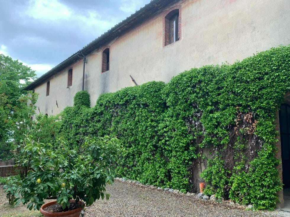 Lornano winey covered with climbing plants