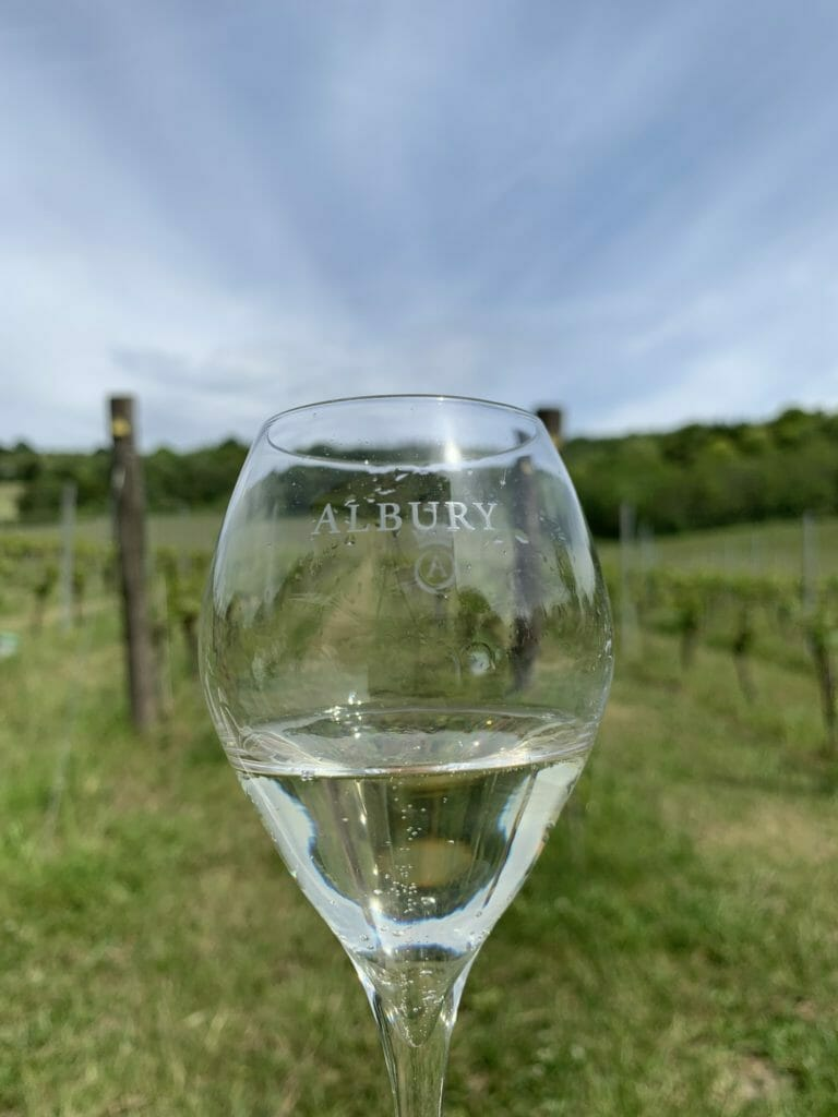 Glass of sparkling wine held up with the vines behind