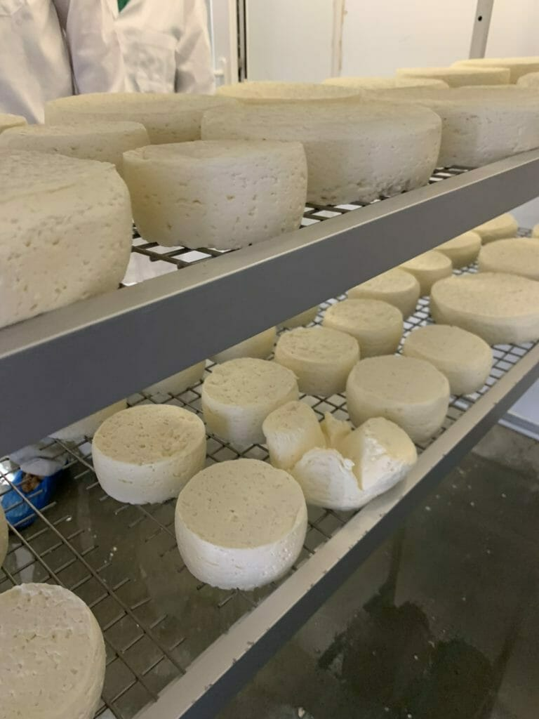 Cheeses on racks